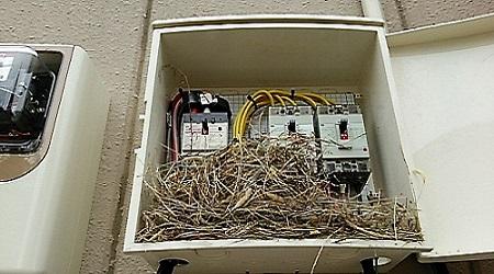 太陽光発電鳥の巣