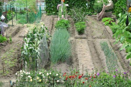 農園土地活用